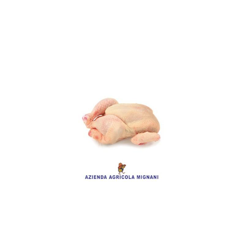 Pollo novello - 1